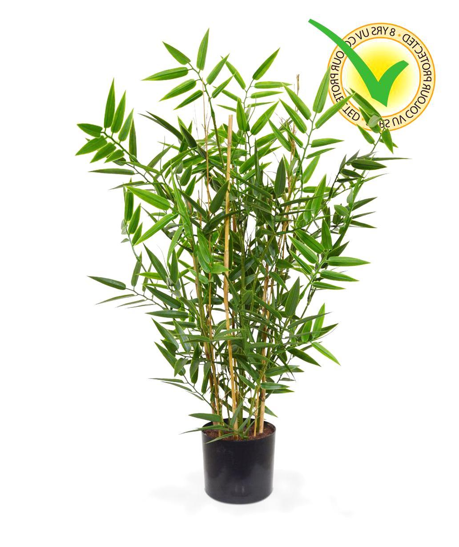 Plante Pour Cuisine Sombre khevga plante de bambou décoratif dans le pot végétaux