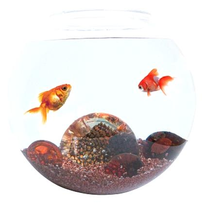 aquarium boule d'occasion