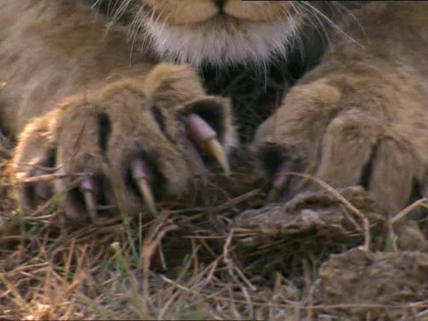griffe lion d'occasion