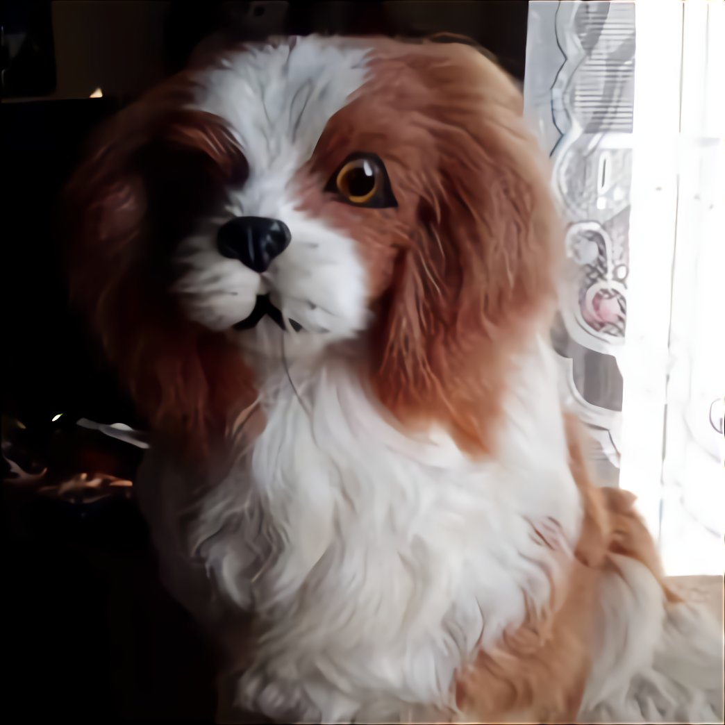 Chiot Cavalier King Charles Donner D Occasion