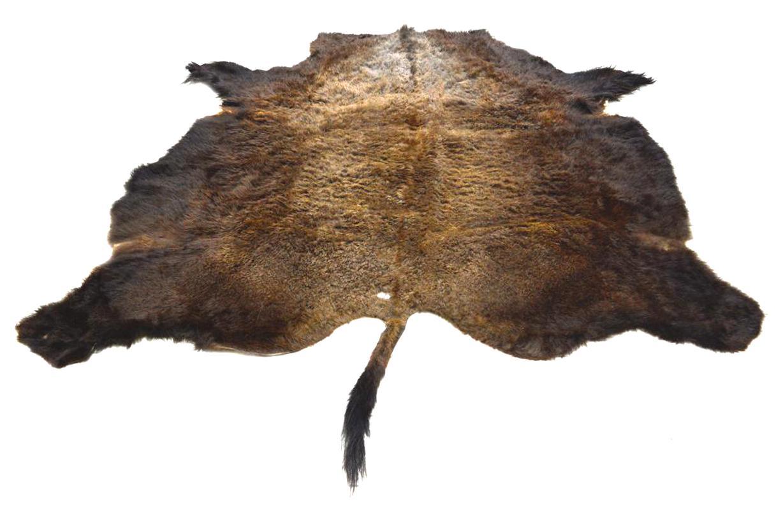 peau bison d'occasion