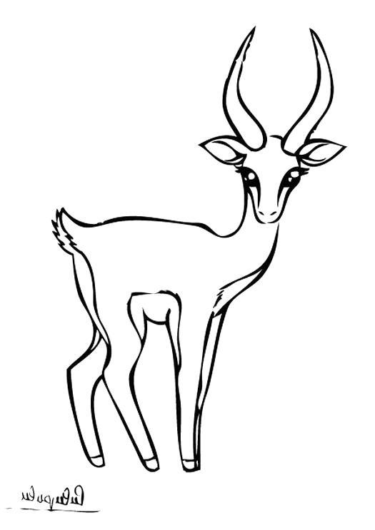 dessin gazelle d'occasion