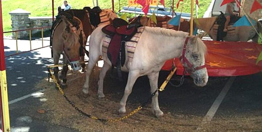 manege poney d'occasion