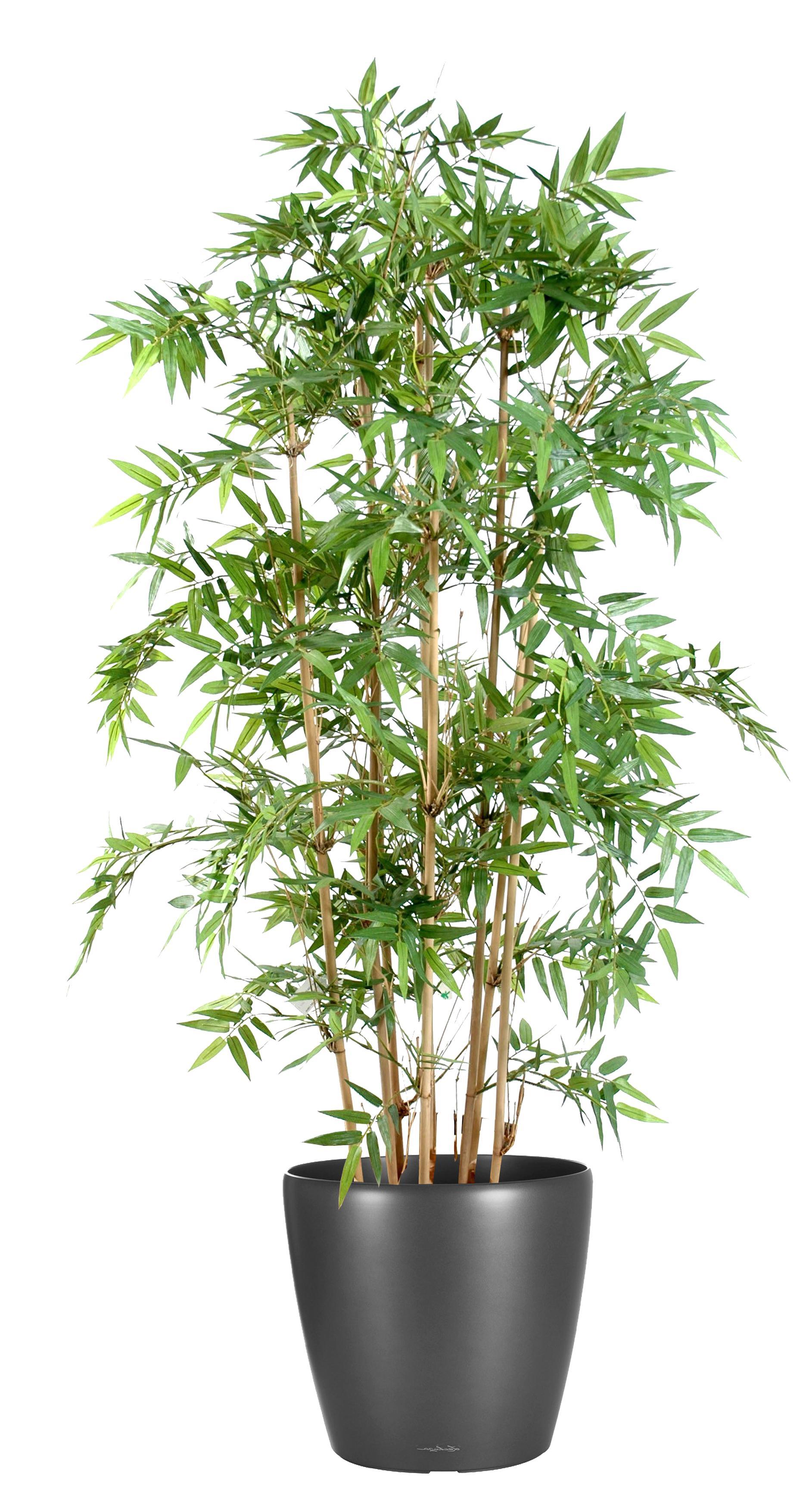 Arche Pour Fleurs Grimpantes Leroy Merlin plantes artificielles d'occasion