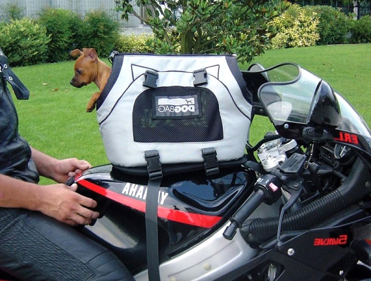 sac chien moto d'occasion